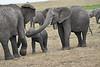 Elephant_Affections_Tangulia_Rekero_Mara_Reserve_2018_Kenya_0065
