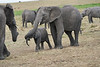 Elephant_Affections_Tangulia_Rekero_Mara_Reserve_2018_Kenya_0059