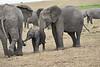 Elephant_Affections_Tangulia_Rekero_Mara_Reserve_2018_Kenya_0071