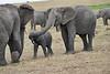 Elephant_Affections_Tangulia_Rekero_Mara_Reserve_2018_Kenya_0063
