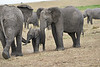 Elephant_Affections_Tangulia_Rekero_Mara_Reserve_2018_Kenya_0069