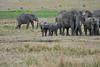 Elephant_Families_Marsh_Tangulia_Mara_Reserve_2018_Kenya_0075