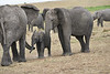 Elephant_Affections_Tangulia_Rekero_Mara_Reserve_2018_Kenya_0068