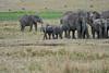 Elephant_Families_Marsh_Tangulia_Mara_Reserve_2018_Kenya_0077