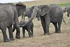 Elephant_Affections_Tangulia_Rekero_Mara_Reserve_2018_Kenya_0066