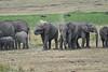 Elephant_Families_Marsh_Tangulia_Mara_Reserve_2018_Kenya_0057
