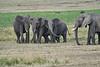 Elephant_Families_Marsh_Tangulia_Mara_Reserve_2018_Kenya_0041