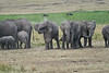 Elephant_Families_Marsh_Tangulia_Mara_Reserve_2018_Kenya_0060