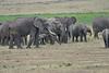 Elephant_Families_Marsh_Tangulia_Mara_Reserve_2018_Kenya_0028