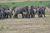 Elephant_Families_Marsh_Tangulia_Mara_Reserve_2018_Kenya_0050