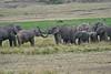 Elephant_Families_Marsh_Tangulia_Mara_Reserve_2018_Kenya_0024