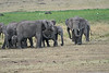 Elephant_Families_Marsh_Tangulia_Mara_Reserve_2018_Kenya_0053