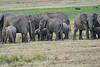 Elephant_Families_Marsh_Tangulia_Mara_Reserve_2018_Kenya_0056