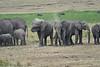 Elephant_Families_Marsh_Tangulia_Mara_Reserve_2018_Kenya_0058