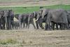 Elephant_Families_Marsh_Tangulia_Mara_Reserve_2018_Kenya_0045