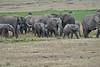 Elephant_Families_Marsh_Tangulia_Mara_Reserve_2018_Kenya_0026