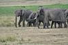 Elephant_Families_Marsh_Tangulia_Mara_Reserve_2018_Kenya_0038