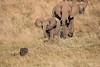 Elephants_Confront_Hyena_Rekero_Mara_Reserve_2018_Kenya_0026