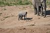 Elephants_Run_To_Mara_River_Tangulia_Mara_Reserve_2018_Kenya_0016