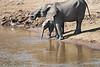 Elephant_Mara_River_Tangulia_Mara_Reserve_2018_Kenya_0003