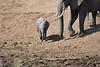 Elephant_Mara_River_Tangulia_Mara_Reserve_2018_Kenya_0005