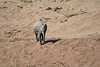 Elephants_Run_To_Mara_River_Tangulia_Mara_Reserve_2018_Kenya_0024