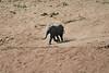 Elephants_Run_To_Mara_River_Tangulia_Mara_Reserve_2018_Kenya_0019