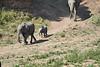 Elephants_Run_To_Mara_River_Tangulia_Mara_Reserve_2018_Kenya_0002