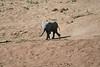 Elephants_Run_To_Mara_River_Tangulia_Mara_Reserve_2018_Kenya_0023