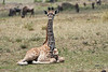 Giraffe_Marsh_Tangulia_Mara_Reserve_2018_Kenya_0006