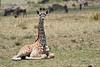 Giraffe_Marsh_Tangulia_Mara_Reserve_2018_Kenya_0007