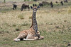 Giraffe_Marsh_Tangulia_Mara_Reserve_2018_Kenya_0004