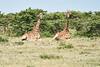 Giraffe_Marsh_Tangulia_Mara_Reserve_2018_Kenya_0017