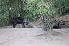 Hyena_Den_Tangulia_Mara_Reserve_2018_Kenya_0006