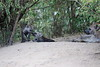 Hyena_Den_Tangulia_Mara_Reserve_2018_Kenya_0023