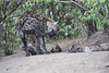 Hyena_Den_Tangulia_Mara_Reserve_2018_Kenya_0038