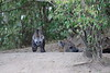 Hyena_Den_Tangulia_Mara_Reserve_2018_Kenya_0008