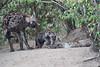Hyena_Den_Tangulia_Mara_Reserve_2018_Kenya_0045
