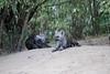 Hyena_Den_Tangulia_Mara_Reserve_2018_Kenya_0018