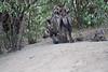 Hyena_Den_Tangulia_Mara_Reserve_2018_Kenya_0037