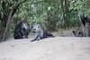 Hyena_Den_Tangulia_Mara_Reserve_2018_Kenya_0017