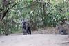 Hyena_Den_Tangulia_Mara_Reserve_2018_Kenya_0003