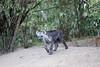 Hyena_Den_Tangulia_Mara_Reserve_2018_Kenya_0009