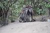 Hyena_Den_Tangulia_Mara_Reserve_2018_Kenya_0035