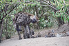 Hyena_Den_Tangulia_Mara_Reserve_2018_Kenya_0042