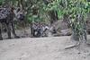 Hyena_Den_Tangulia_Mara_Reserve_2018_Kenya_0046