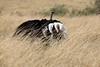 Ostrich_Rekero_Mara_Reserve_2018_Kenya_0001