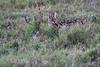 Serval_Marsh_Tangulia_Mara_Reserve_2018_Kenya_0017