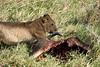 Yaya_Cubs_Playing_Lion_Marsh_Tangulia_Mara_Reserve_2018_Kenya_0052