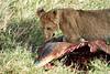 Yaya_Cubs_Eating_Lion_Marsh_Tangulia_Mara_Reserve_2018_Kenya_0147
